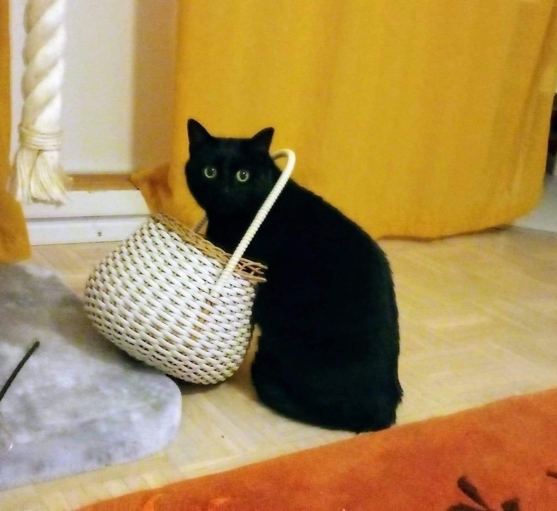 Kodittomat Kissat Pirkanmaa